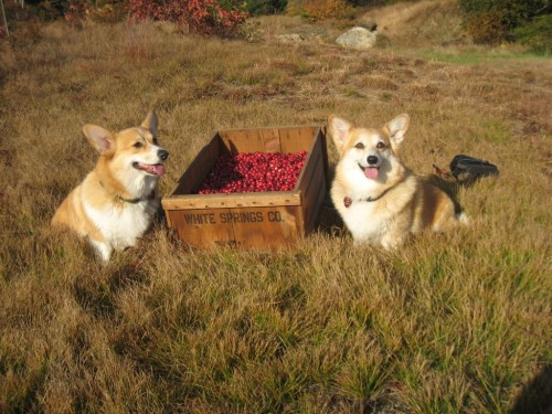 Tasha and Daisy posing with the Cranberries